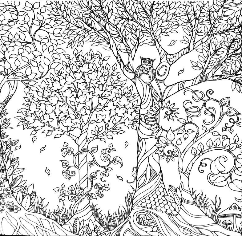 Johanna Basford - Padurea fermecata. Carte de colorat si activitati antistres -